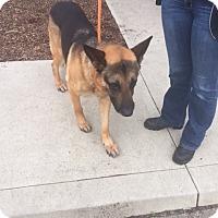Adopt A Pet :: Winchester - Qualicum Beach, BC