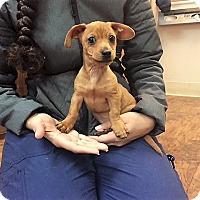 Adopt A Pet :: Phillip - Dublin, CA