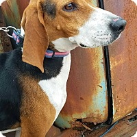 Adopt A Pet :: Whitney - Nashville, TN