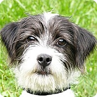 Adopt A Pet :: Gretchen - Mocksville, NC