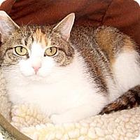 Adopt A Pet :: Zoie - Germansville, PA