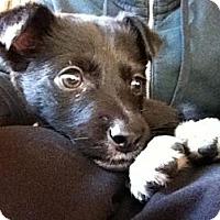 Adopt A Pet :: Kiva - Saskatoon, SK