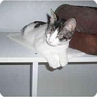Adopt A Pet :: Jessica - Hamburg, NY