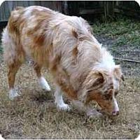 Adopt A Pet :: Patch Finnegan - Orlando, FL
