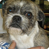 Adopt A Pet :: Mama - Phoenix, AZ