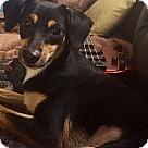 Adopt A Pet :: Maria