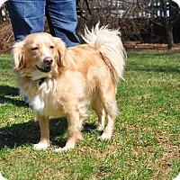 Adopt A Pet :: Reilly - Westminster, MD