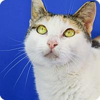 Adopt A Pet :: Celeste - Carencro, LA