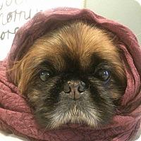 Adopt A Pet :: Cookie - Windermere, FL