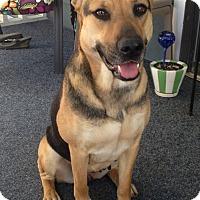 Adopt A Pet :: Lady - Lawrenceville, GA