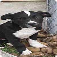 Adopt A Pet :: A379386 - San Antonio, TX