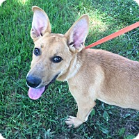 Adopt A Pet :: Mary Opal - Portland, ME