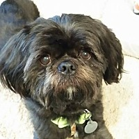 Adopt A Pet :: Steeler Turner - Urbana, OH