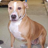 Adopt A Pet :: Andrea - Brooklyn, NY