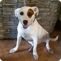 Adopt A Pet :: Auggie Adoption Pending - Waldorf, MD