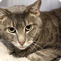 Adopt A Pet :: Baxter - Sarasota, FL