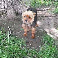 Adopt A Pet :: Maddie Jo - Broken Bow, NE