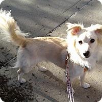 Adopt A Pet :: Lucky - Bronx, NY