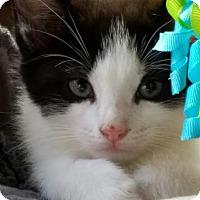 Adopt A Pet :: Iggy - Island Park, NY