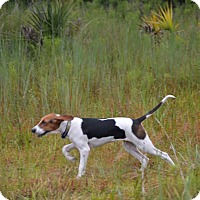 Adopt A Pet :: Danny - Cape Coral, FL
