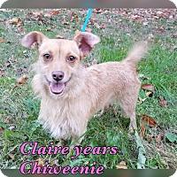 Adopt A Pet :: Claire - Pomfret, CT