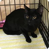 Adopt A Pet :: Brenton - Elyria, OH