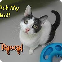 Adopt A Pet :: Rascal - Sarasota, FL