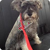 Adopt A Pet :: Cecil - Redondo Beach, CA