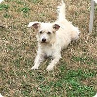 Adopt A Pet :: Richmond - Bedminster, NJ