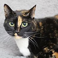 Adopt A Pet :: Sascha - Raleigh, NC