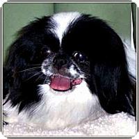 Adopt A Pet :: ZuZu in Wichita, KS. - Seymour, MO