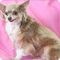 Adopt A Pet :: Delilah - Mooy, AL