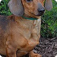 Adopt A Pet :: Sebastian - Bridgeton, MO