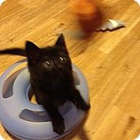 Adopt A Pet :: Popoki - Monroe, GA