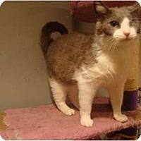 Adopt A Pet :: Daisy--PETSMART - Muncie, IN