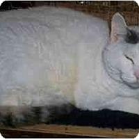 Adopt A Pet :: J.C. - Odenton, MD