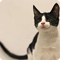 Adopt A Pet :: Hamsters - Sacramento, CA