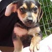 Adopt A Pet :: River - Staunton, VA