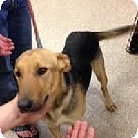 Adopt A Pet :: Heidi - Modesto, CA