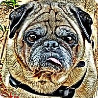 Adopt A Pet :: Otis-NJ - Mays Landing, NJ