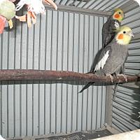 Adopt A Pet :: Bella & Jack - Neenah, WI