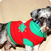 Adopt A Pet :: Bandit - Sharonville, OH