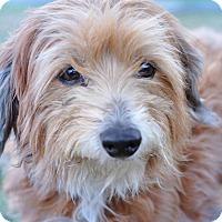 Adopt A Pet :: Scruff McGruff - Gainesville, FL
