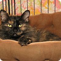 Adopt A Pet :: Shasta - Milford, MA