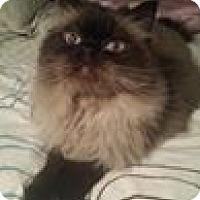 Adopt A Pet :: Nicky - Columbus, OH