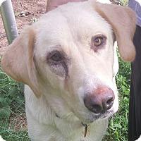 Adopt A Pet :: Shelby - Staunton, VA