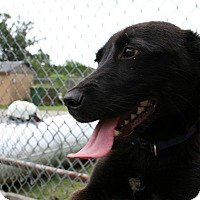Adopt A Pet :: Tucker in CT - East Hartford, CT