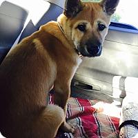 Adopt A Pet :: Cola - Buena Park, CA