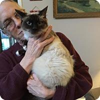 Adopt A Pet :: Aurora - McDonough, GA