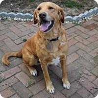 Adopt A Pet :: Martin - Dayton, OH